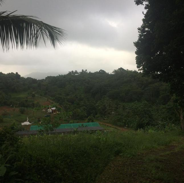 Фото - Grenada Agrocomplex